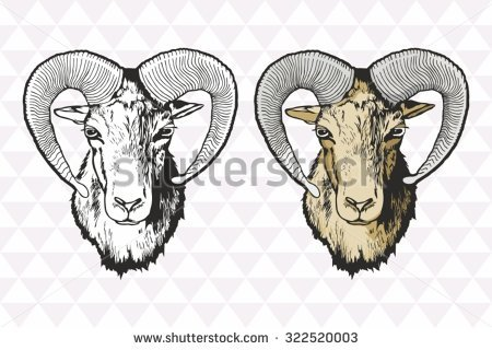 Mouflon Stock Photos, Royalty.