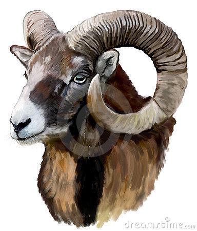 Mouflon Stock Illustrations.