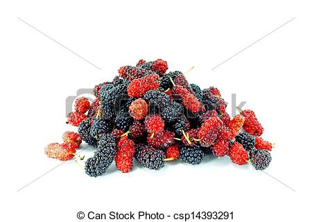 Stock Illustration of Mulberry on white background. csp14393291.