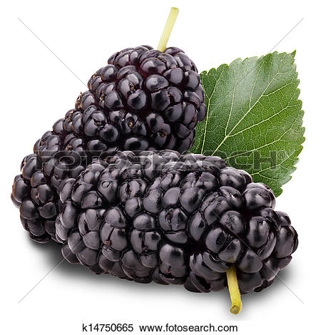 Stock Image of mulberry k14750665.