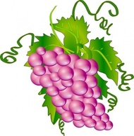 Mulberry Clipart.