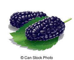 Mulberry Clipart and Stock Illustrations. 2,939 Mulberry vector.