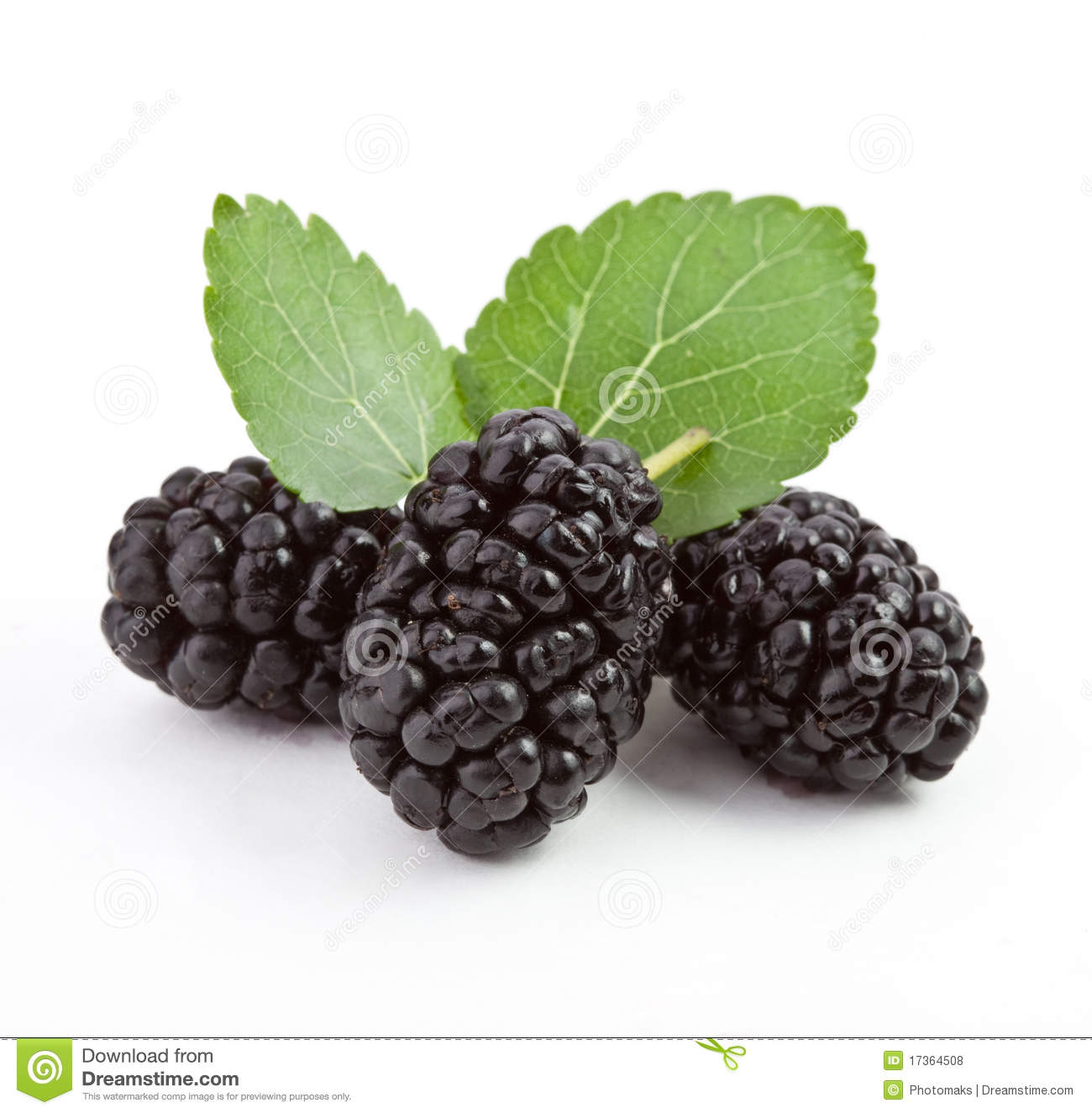 Mulberry Stock Photos, Images, & Pictures.
