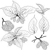 Mulberry Clipart and Illustration. 165 mulberry clip art vector.