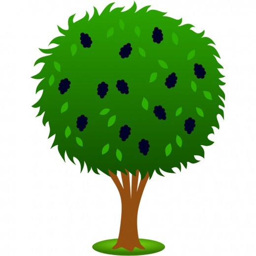 Mulberry tree clipart - Clipground Almond Tree Clipart
