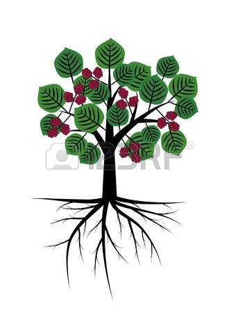 231 Mulberry Tree Cliparts, Stock Vector And Royalty Free Mulberry.
