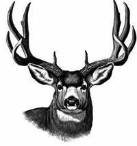 Buck clipart mule deer, Buck mule deer Transparent FREE for.