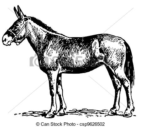 Mule Clipart and Stock Illustrations. 1,214 Mule vector EPS.