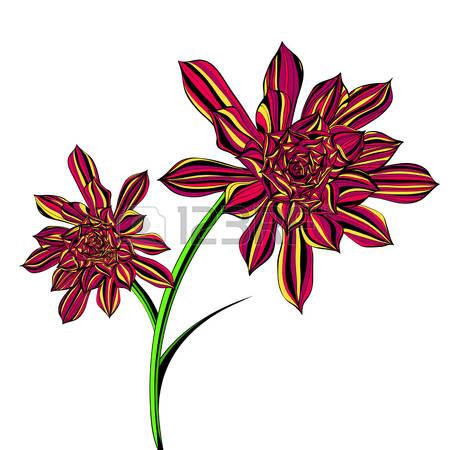 Crassulaceae Stock Photos Images. Royalty Free Crassulaceae Images.