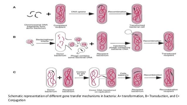 Multidrug Resistant Oraganisms (MDRO) infection control.