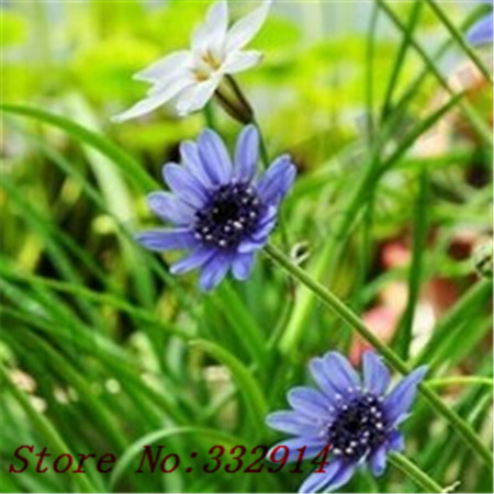 Online Buy Wholesale daisy chinese from China daisy chinese.