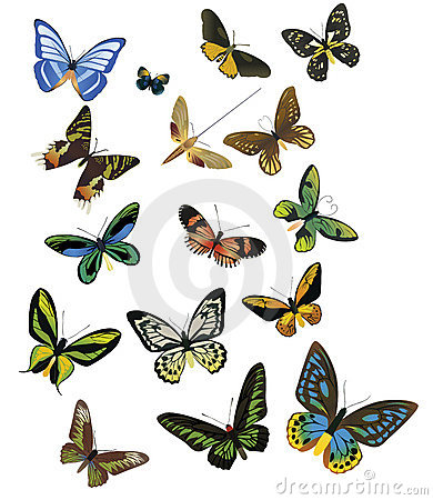 Butterfly Royalty Free Stock Photography.