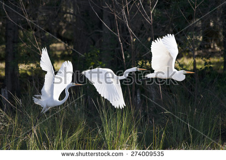 Birds In Flight Stock Images, Royalty.