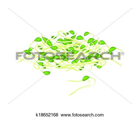 Clip Art of Fresh Mung Beans Sprouts on White Background k18652168.