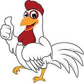 Chicken Stock Photos.