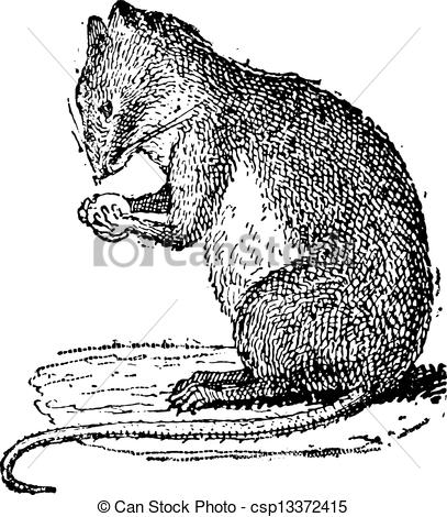 Vector Clip Art of Field Mouse or Muridae, vintage engraving.