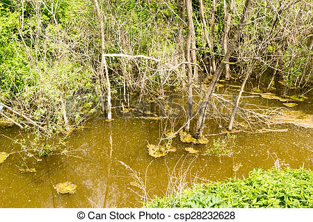 Stock Photo of Dirty Swamp Water in a Lagoon.
