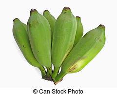 Stock Photography of Husk of Banana. Musa X paradisiaca L. Family.
