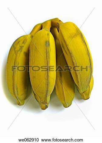 Stock Photography of Bananas. Musa X paradisiaca L. Family.