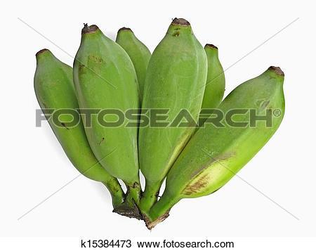 Stock Photo of Green Banana, Musa X paradisiaca L, Musaceae.