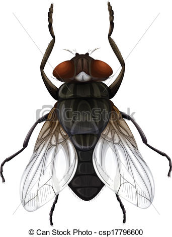 Musca Stock Illustrations. 79 Musca clip art images and royalty.