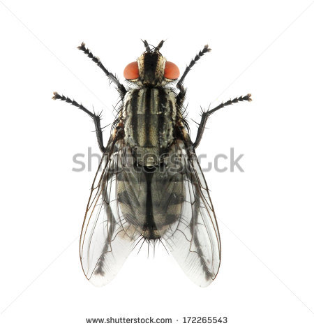 Mouche Stock Photos, Royalty.