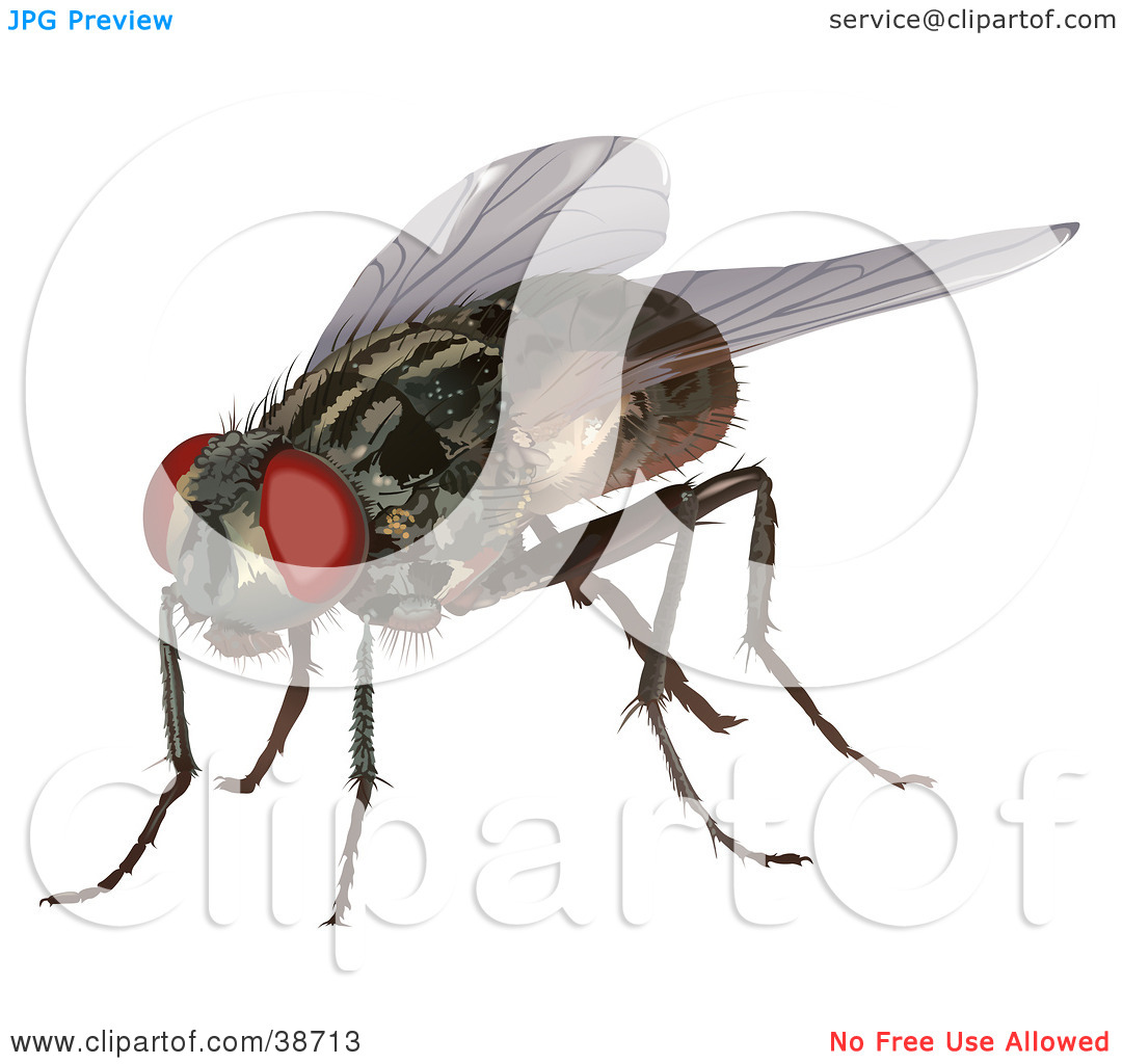Clipart Illustration of a Housefly (Musca domestica) by dero #38713.