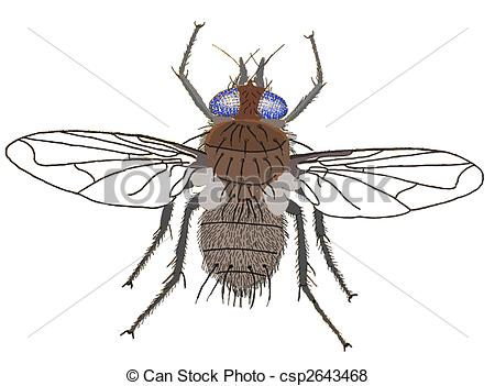 Stock Illustration of House Fly Musca domestica Computer Painting.