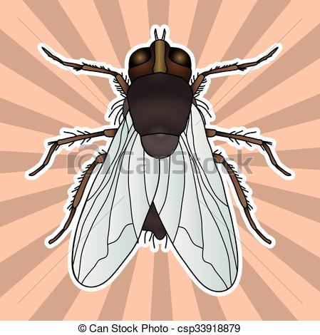 Vectors Illustration of Insect anatomy. Sticker fly. Musca.