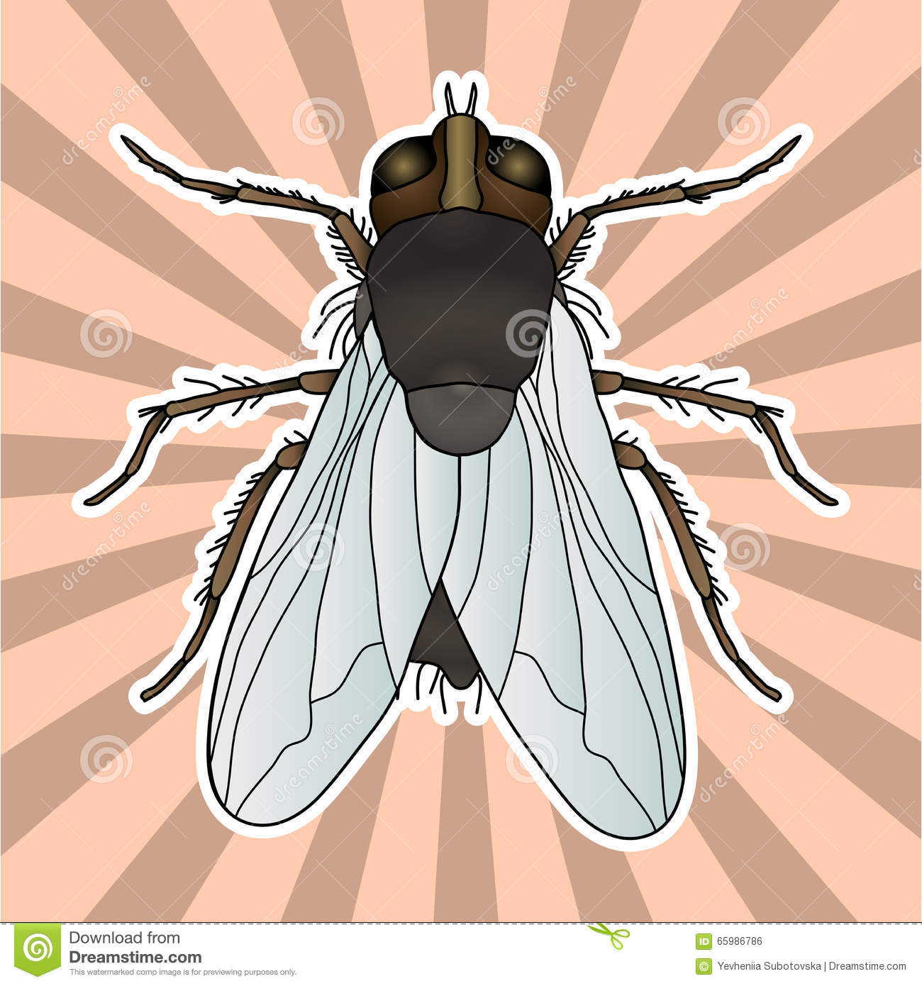 Fly. Musca Domestica Insect. A Realistic Fly Stock Vector.