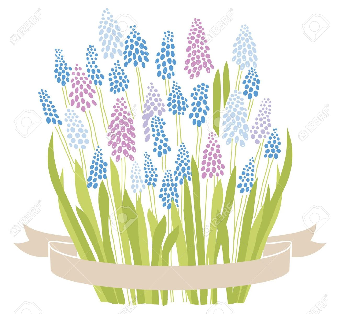 Blue Grape Hyacinth Muscari Spring Flower Bouquet Royalty Free.