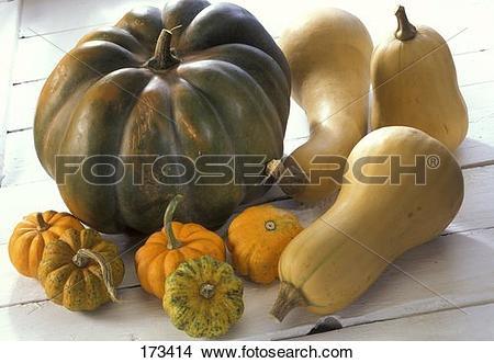 Stock Photo of Muscat de Provence squash, butternut squash, Jack.