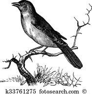 Muscicapidae Clip Art Royalty Free. 10 muscicapidae clipart vector.