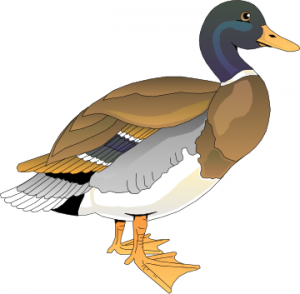Duck 2 Clip Art Download.