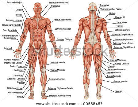 muscular man clipart full body - Clipground