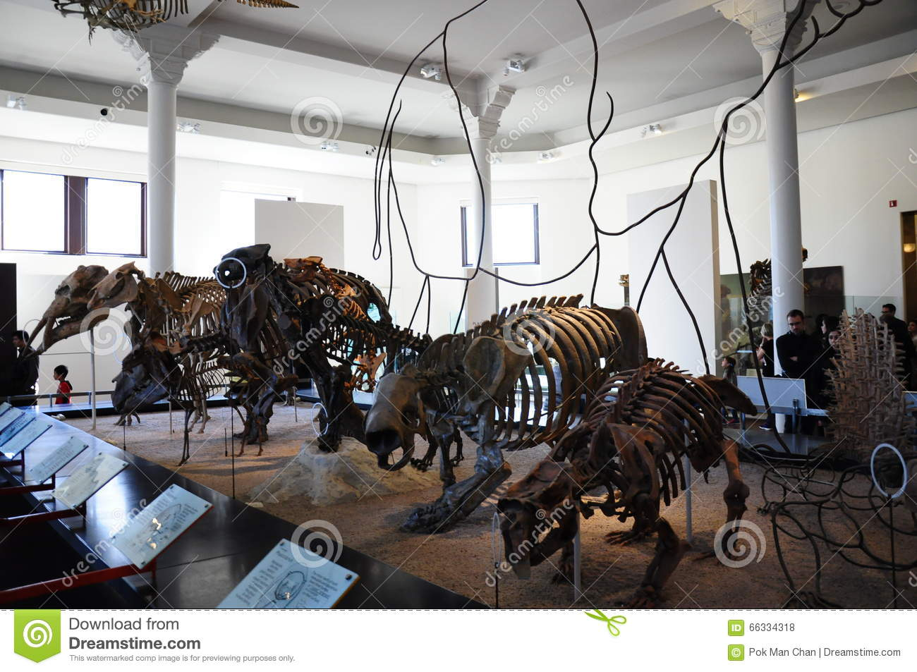 Dinosaur Dino Skeleton In New York NYC American Museum Of Natural.