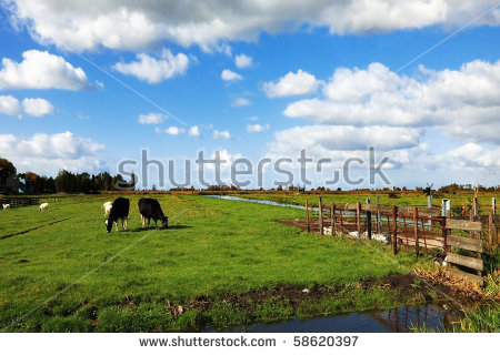 Village animal Stock Photos, Images, & Pictures.