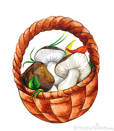 Illustrated Mushrooms Stock Photo.