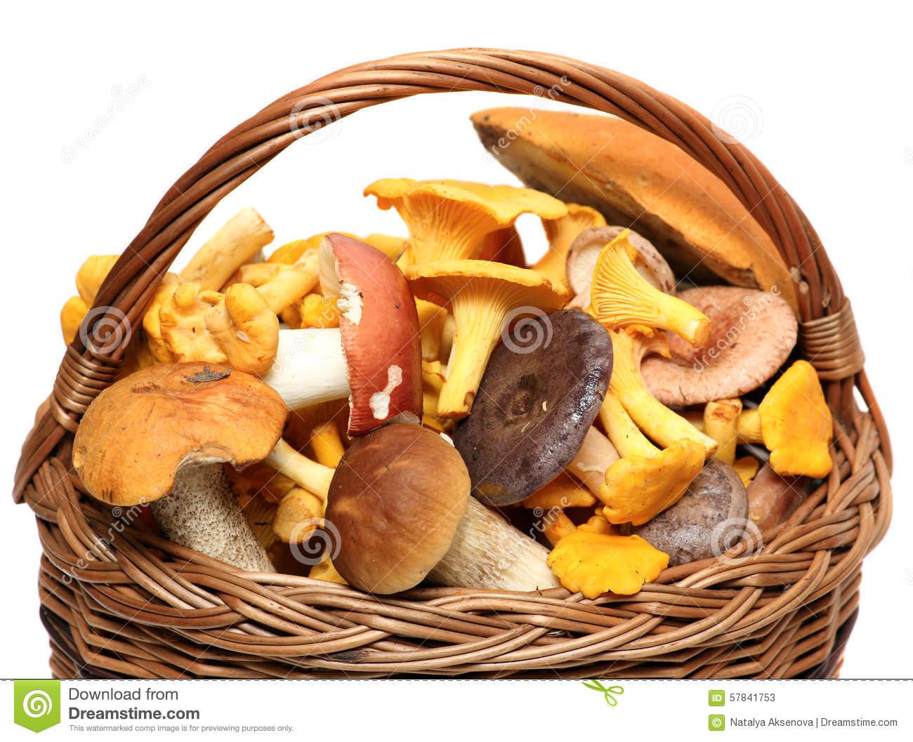 Basket Of Wild Mushrooms Isolated On White Stock Photo.