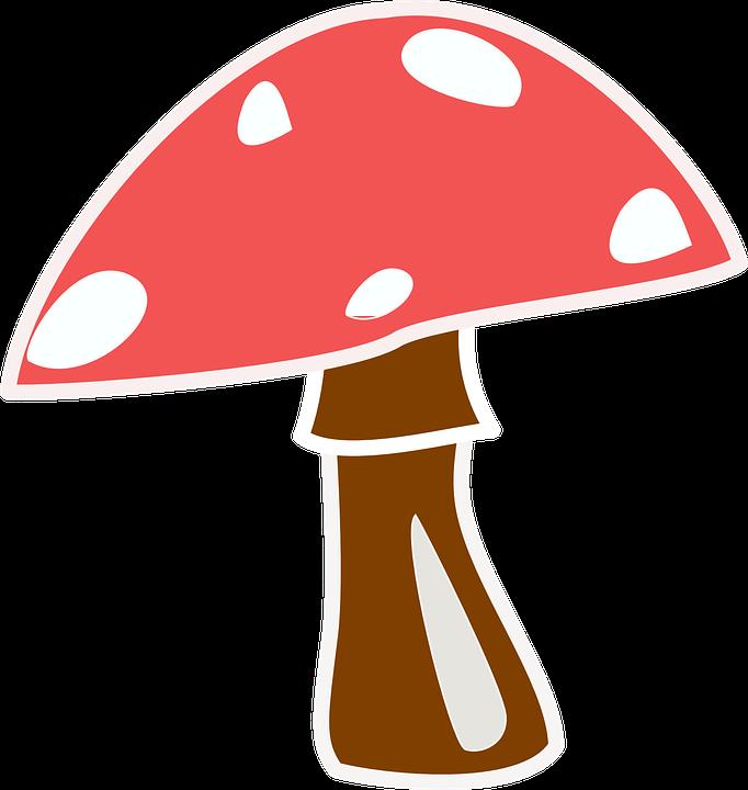 Mushroom, Cap.