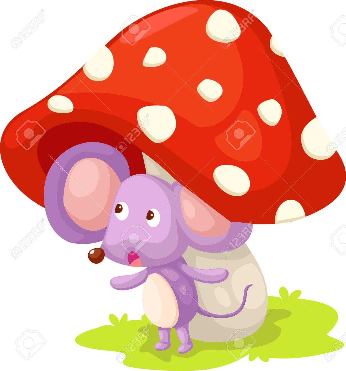 Mushroom Cap Stock Photos & Pictures. Royalty Free Mushroom Cap.