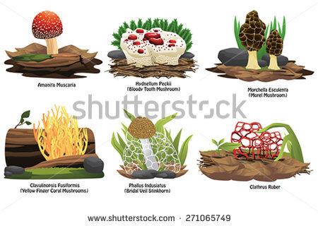 Mushroom Coral Stock Vectors & Vector Clip Art.