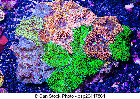Stock Image of colorful Florida mushroom coral.