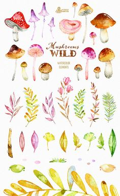 Wild Mushrooms. Watercolor forest clipart, wreath, autumn, leaves.