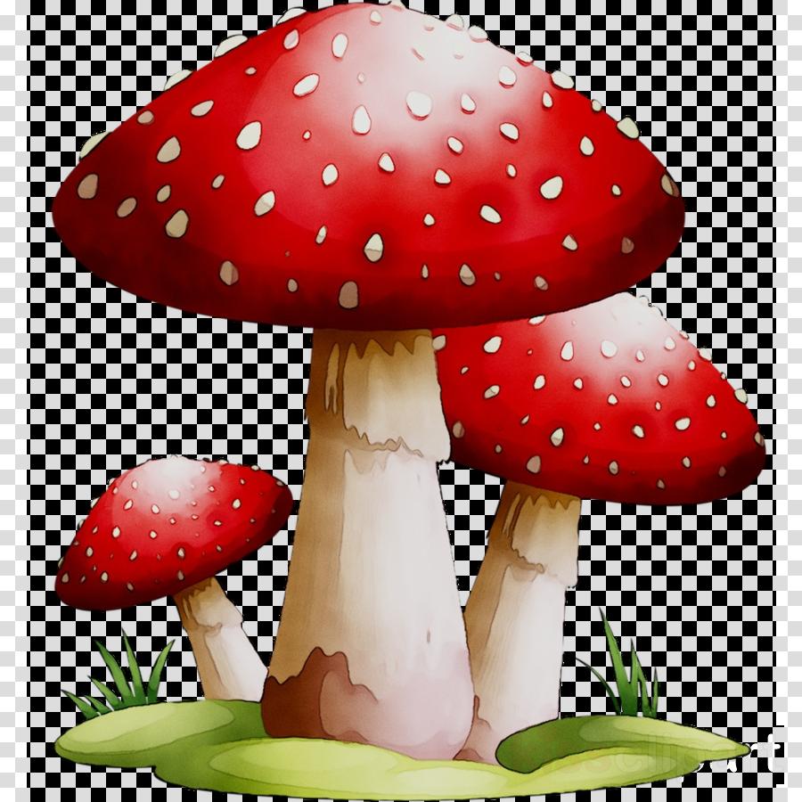 Mushroom clipart mushroom plant, Mushroom mushroom plant.