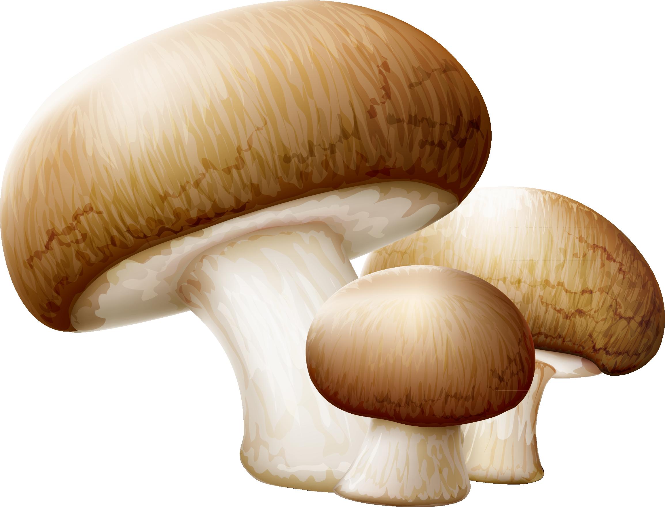 Mushroom clipart edible mushroom, Mushroom edible mushroom.