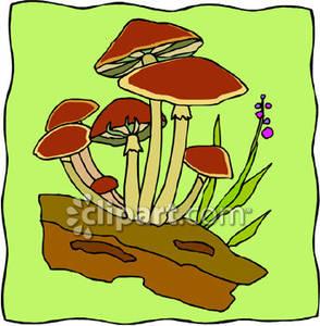 of Wild Mushrooms.
