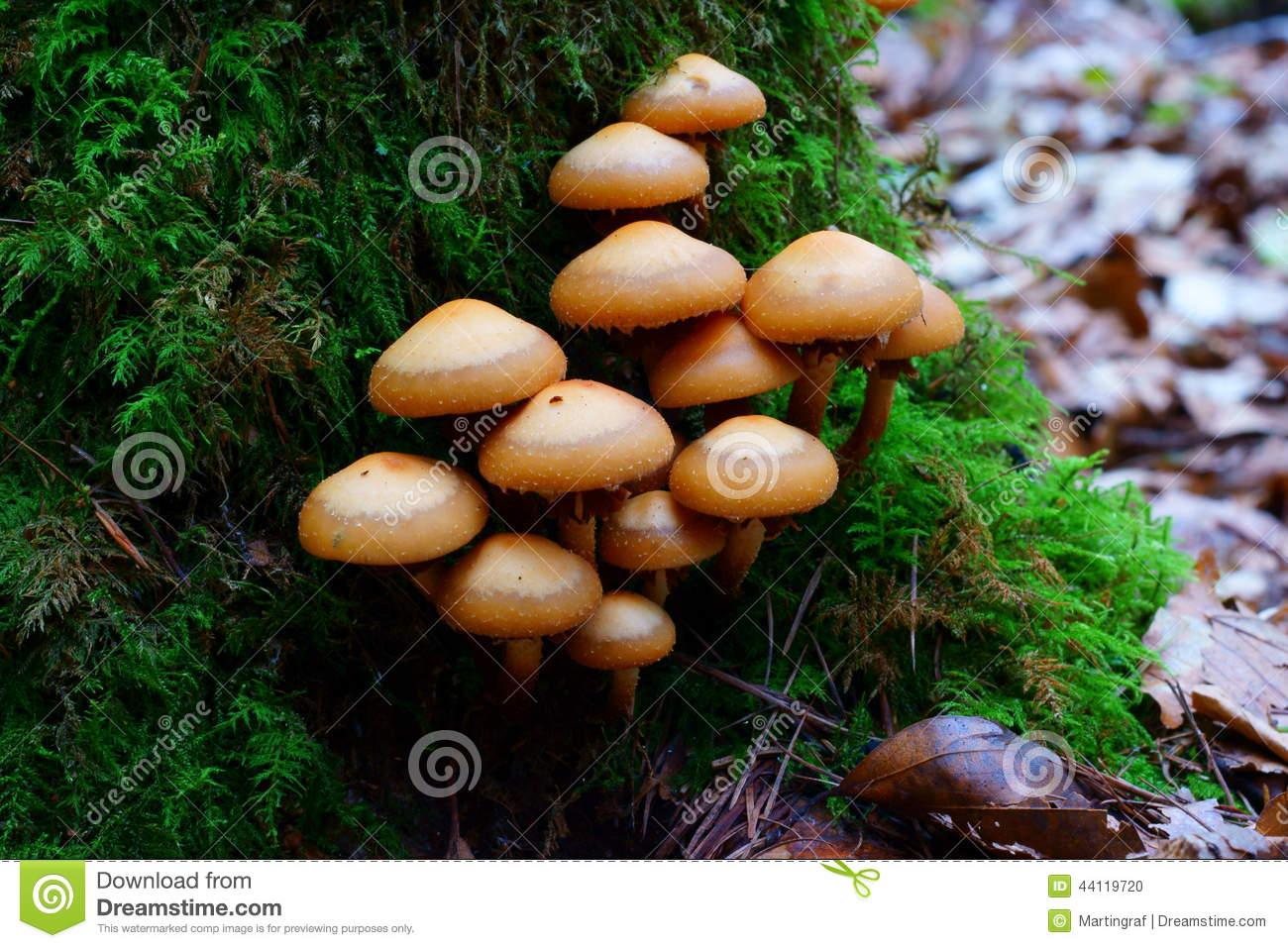 Mushroom tree stump clipart.