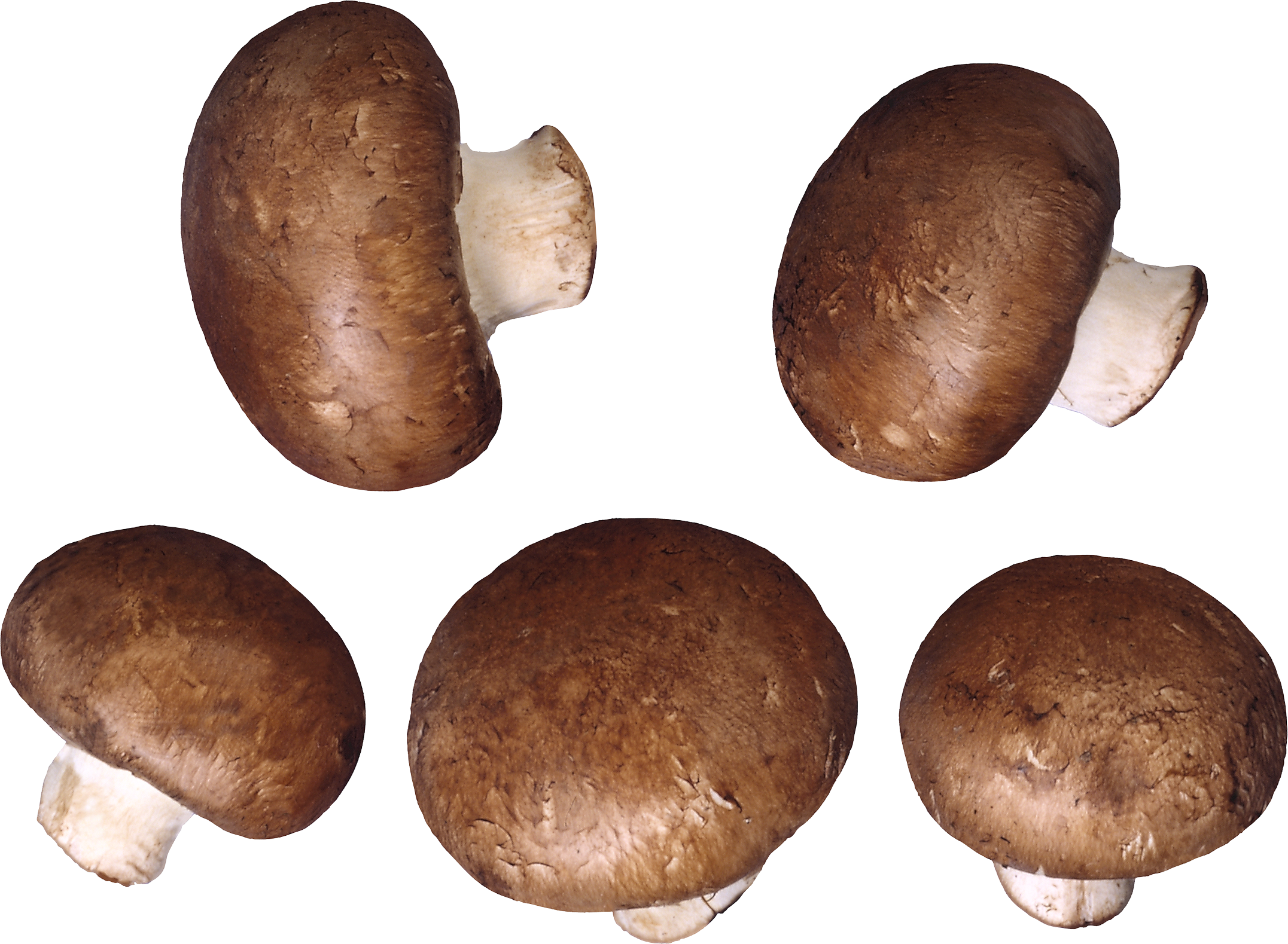 Mushroom PNG images, free Mushroom pictures PNG.