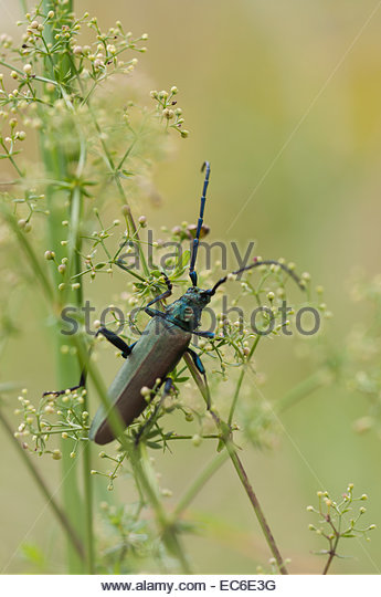 Picture Beetles Stock Photos & Picture Beetles Stock Images.